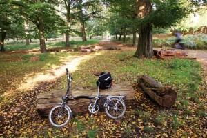 Folding Bikes Solve Brisbane Problems